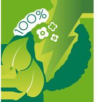 Webseite mit 100% Ökostrom